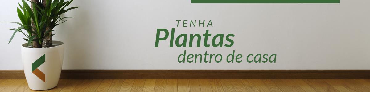 Tenha plantas dentro de casa - 8 dicas de como ter uma casa sustentável